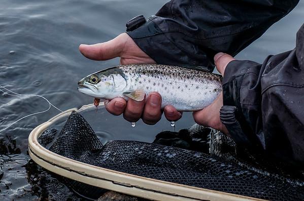 """I duskregn helt i starten av mars bare noen få meter fra land fikk jeg denne fisken. Jeg hadde egentlig gitt opp. Stangen min hadde fått en slitasjeskade, slik at jeg ikke fikk kastet langt. Men plutselig så satt det noe på i enden av snøret. Fluen var """"kobberbassen."""""""
