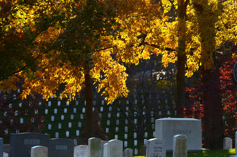 Arlington National Cemetery Veterans Day