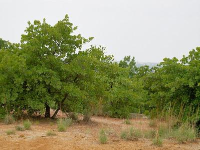 2011 SW Nature Preserve