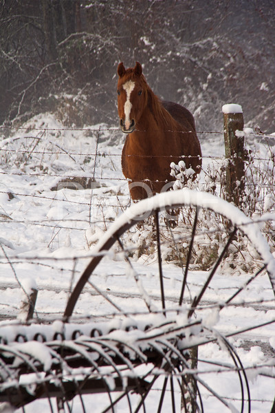 Bobby the horse saying hello in Winter wonderland