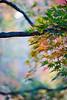 Leaves - 11-6-2013