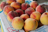 Fresh Armenian peaches (so sweet!)