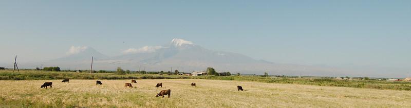 Views of Mount Ararat, cycling through the flat Ararat Valley