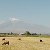 Views of Mount Ararat, cycling through the flat Ararat Valley