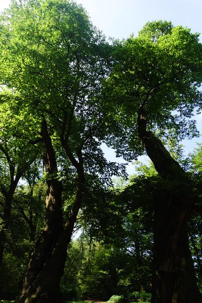 sonsbeek_art_2008  036