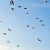 Vogels in Sonsbeek