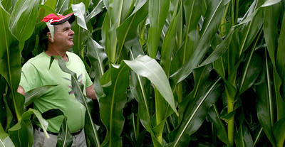 Arnie Ralston checks on some corn plants at a field near his house on IL route 130 about ten miles south of Charleston, Illinois on Friday, July 4, 2008.  The corn was well over six feet tall at this time making the old adage, 'Knee high by July Fourth.' obsolete.   (Jay Grabiec/Staff Photographer)