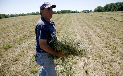 Arnie Ralston strings out some alfalfa to check for moisture levels while baling hay at a field off of IL-130 about twelve miles from Charleston, Illinois on Tuesday, June 16, 2008. (Jay Grabiec/Staff Photographer)