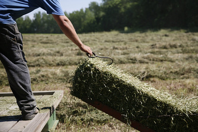 Nate Ralston moves a bale of hay to the back of the trailer while baling hay at a field near his house on Tuesday, June 16, 2008. (Jay Grabiec/Staff Photographer)