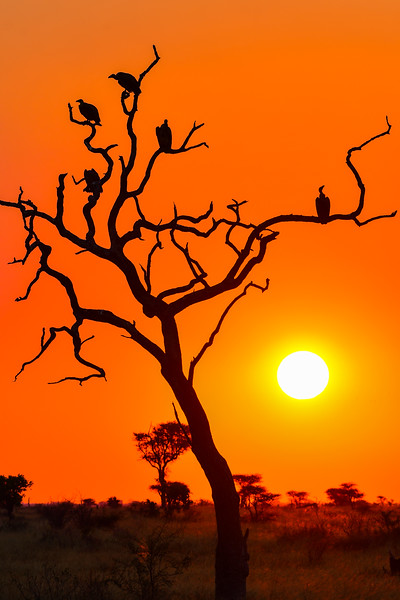 Sunset with Vultures