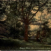 """A postcard in my collection, captioned: """"Augusta, Maine, Oak tree on grounds of Judge Benedict F. Maher""""<br /> On the reverse it says: """"Under this tree Aaron Burr who was afterward Vice-President of the United States, wooed and won an Indian princess """"Jataqua"""" in 1775. History affirms that on this very spot, also, Col. Benedict Arnold killed an immense black bear while stopping here on his way to Quebec in Oct. 1775."""""""