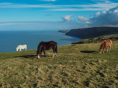 Horses on the coastal path