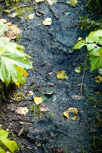 Yikes! Fresh bear tracks... Cool!