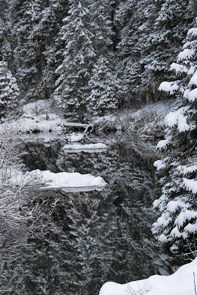 A pretty scene along a stream. Yakutat AK