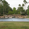 Freestone Park, Gilbert, AZ - This is part of the pond I walk around on my daily walks.