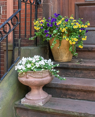 Beacon Hill and Back Bay Window Boxes & Doorstep Containers