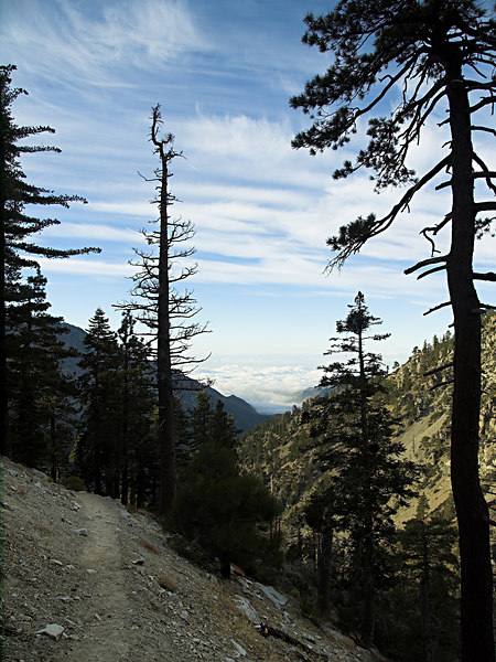 Baldy Bowl Trail to San Antonio Ski Hut<br /> October 10, 2006<br /> Pine trees framing clouds over Clairemont