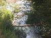 San Antonio Creek immediately below Shinn Road bridge.<br /> October 14, 2011