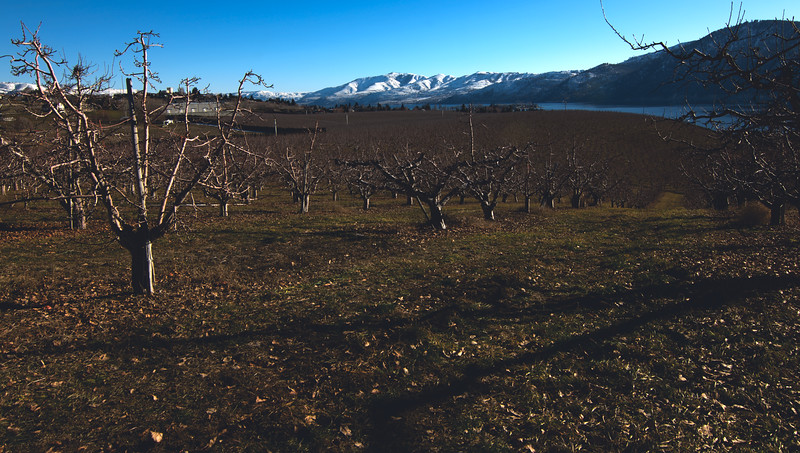 Lake Chelan from Manson Orchards