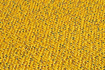 Jigsaw Puzzle Nightmare