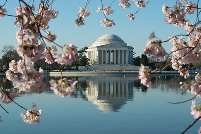cherryblossoms-0530