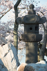 cherryblossoms-0509