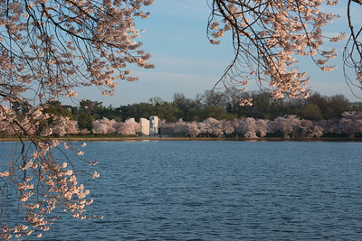 cherryblossoms-0284