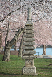 cherryblossoms-0445