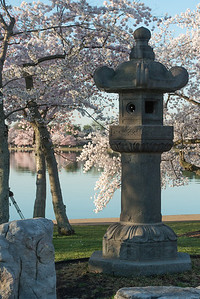 cherryblossoms-0493