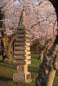 cherryblossoms-0268