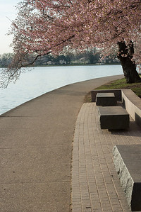 cherryblossoms-0421