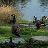 City of Grants Pass Riverside Park