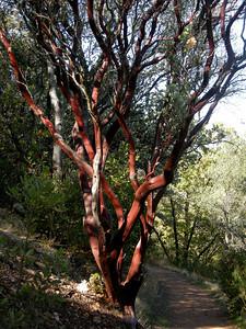 manzanita bark is amazing