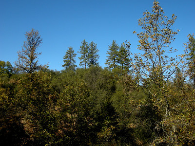"""Ponderosa pine and Calif black oak say """"mesic"""" meaning the average annual T is less than 47 F"""