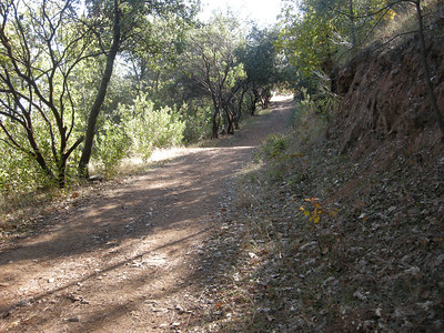 they did a great job of clearing away the poison oak