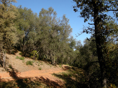 veg on the south slopes is Interior live oak, except...is that a ponderosa there??