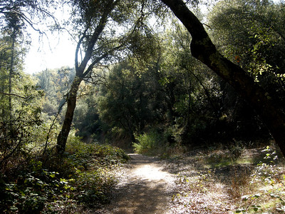 California oak woodlands are truly diverse in some areas