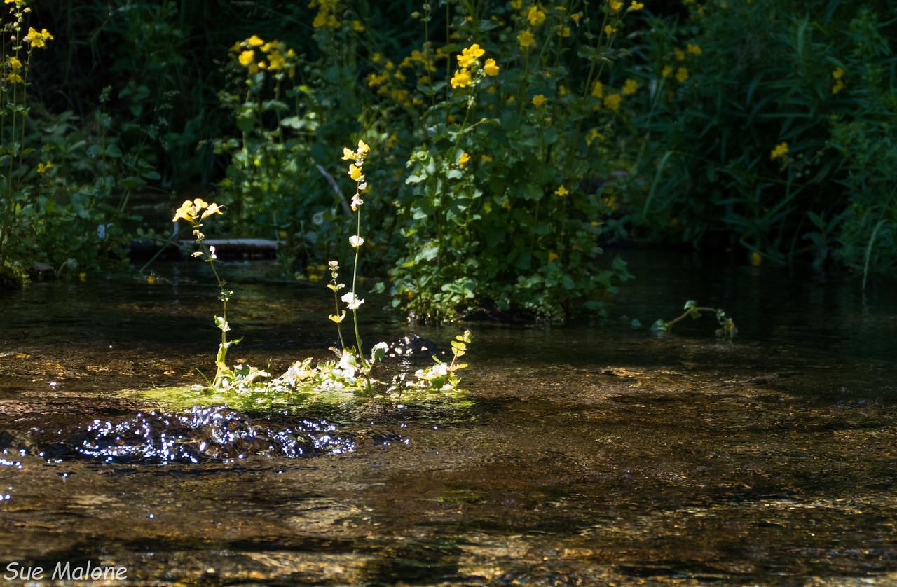 Headwaters of Spring Creek