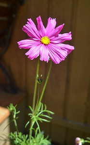 cosmos in the cabin bed