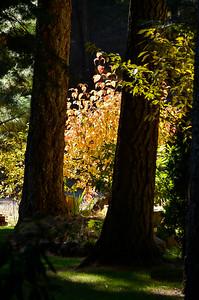 dogwood on the southwest side of the property