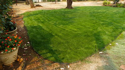 freshly mowed after fertilizing the bad spots toward the center.  Has a hard time with the heat.