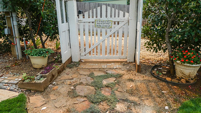 wooly thyme walkway has trouble on the dry end near the gate