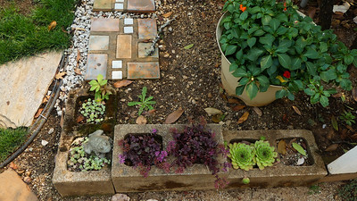 Mo did the stepping stones this year and added the succulents to the blocks
