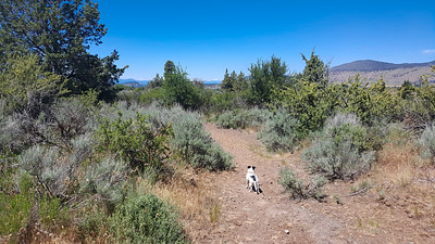 Moore Park Trails