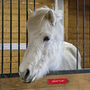 Horse farm Metamora