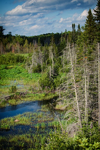 Minnesota Wetlands