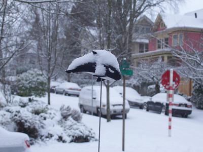 Snowpacolypse 2008