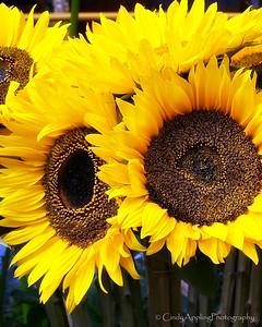 Sun Flower Market - Quito, Ecuador