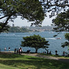 a lovely harbourside park at Mrs. Macquarie's Chair (her husband had a big chair carved out of the cliff for her to sit and watch the boats)