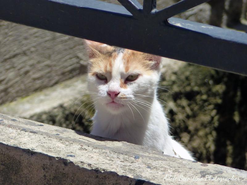 Local Cat